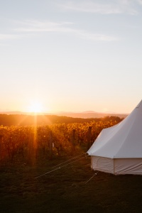 Vineyard Glamping at Clover Hill
